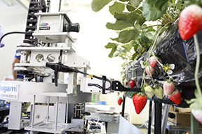 Example of Introduction / Strawberry Harvesting Robot